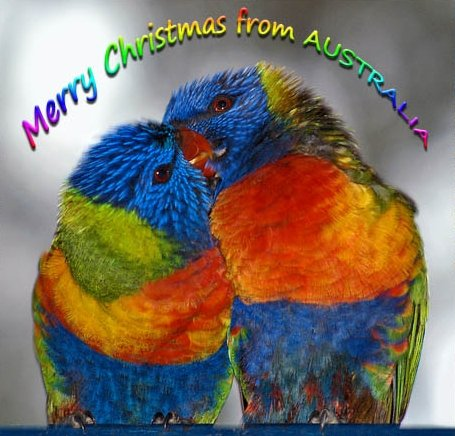 Do it yourself christmas cards in australia greetings from australia a medium sized parrot found in eastern australia m4hsunfo Choice Image